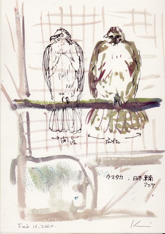 Ueno-zoo4